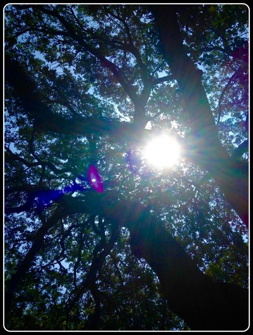 act-prep-solar-eclipse-sun-pic